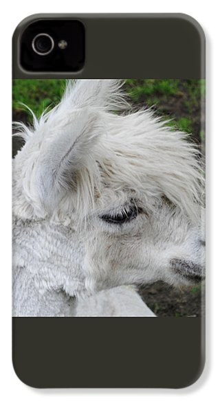 Baby Llama IPhone 4 / 4s Case by Ellen Henneke