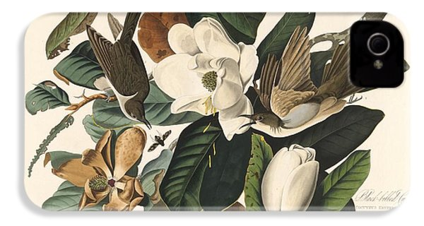 Black-billed Cuckoo IPhone 4 Case by Dreyer Wildlife Print Collections