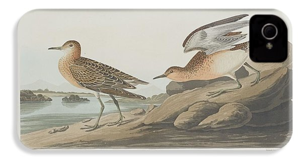 Buff-breasted Sandpiper IPhone 4 Case by Rob Dreyer