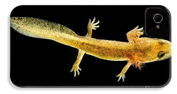 California Giant Salamander Larva IPhone 4 Case by Dant� Fenolio