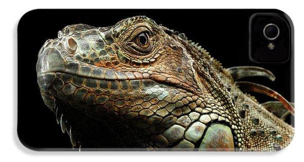 Closeup Green Iguana Isolated On Black Background IPhone 4 / 4s Case by Sergey Taran