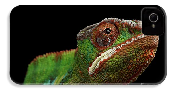 Closeup Head Of Panther Chameleon, Reptile In Profile View Isolated On Black Background IPhone 4 / 4s Case by Sergey Taran