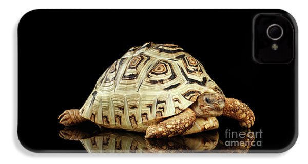 Closeup Leopard Tortoise Albino,stigmochelys Pardalis Turtle With White Shell On Isolated Black Back IPhone 4 Case by Sergey Taran