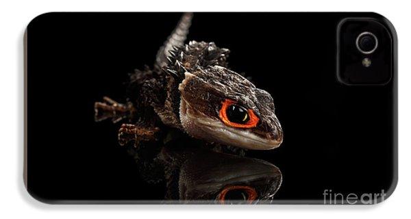 Closeup Red-eyed Crocodile Skink, Tribolonotus Gracilis, Isolated On Black Background IPhone 4 Case by Sergey Taran