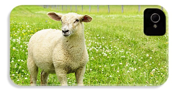 Cute Young Sheep IPhone 4 Case