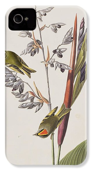 Golden-crested Wren IPhone 4 Case by John James Audubon