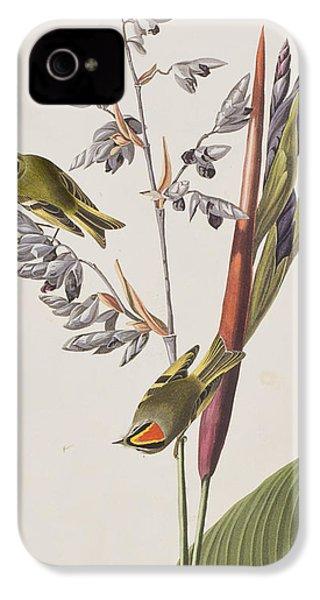 Golden-crested Wren IPhone 4 Case by John James Audubon