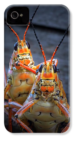 Grasshoppers In Love IPhone 4 Case by Mark Andrew Thomas