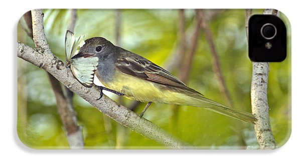 Great Crested Flycatcher IPhone 4 Case by Anthony Mercieca