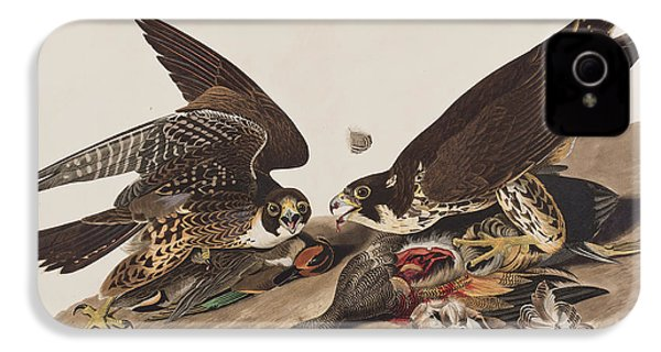 Great-footed Hawk IPhone 4 / 4s Case by John James Audubon