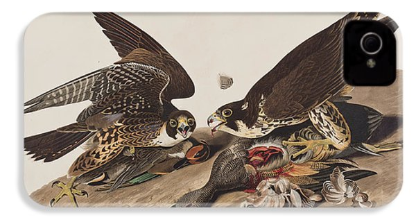 Great-footed Hawk IPhone 4 Case by John James Audubon