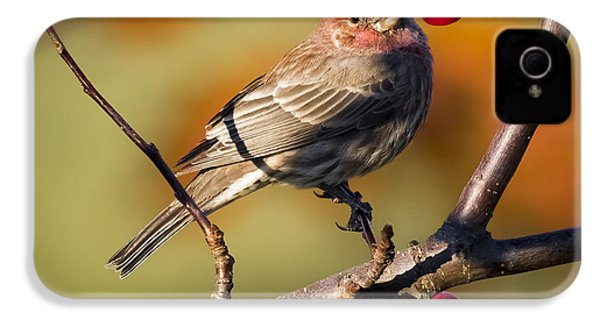 House Finch IPhone 4 Case by Ricky L Jones