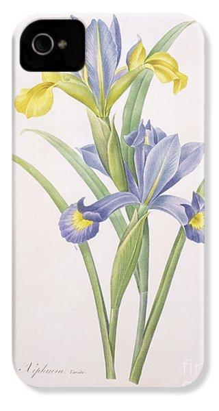 Iris Xiphium IPhone 4 Case by Pierre Joseph Redoute