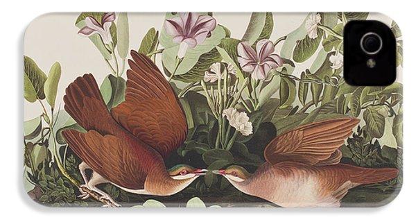 Key West Dove IPhone 4 / 4s Case by John James Audubon