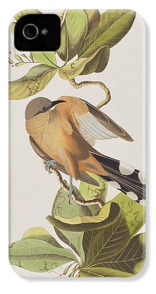 Mangrove Cuckoo IPhone 4 Case by John James Audubon
