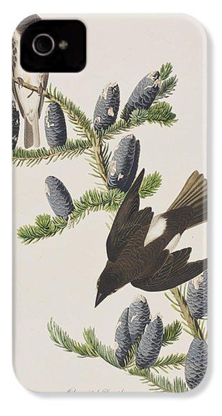 Olive Sided Flycatcher IPhone 4 Case by John James Audubon