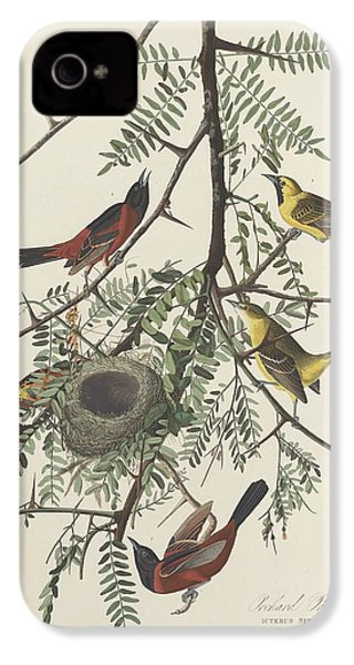 Orchard Oriole IPhone 4 Case by Rob Dreyer
