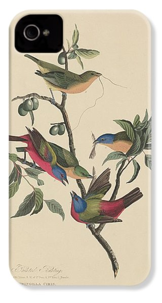 Painted Bunting IPhone 4 Case by Rob Dreyer