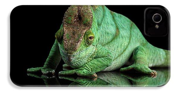 Parson Chameleon, Calumma Parsoni Orange Eye On Black IPhone 4 / 4s Case by Sergey Taran