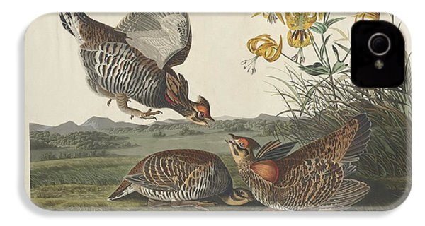 Pinnated Grouse IPhone 4 Case by Dreyer Wildlife Print Collections