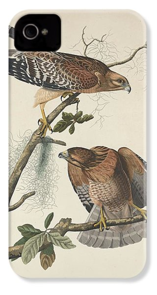 Red Shouldered Hawk IPhone 4 Case by Dreyer Wildlife Print Collections