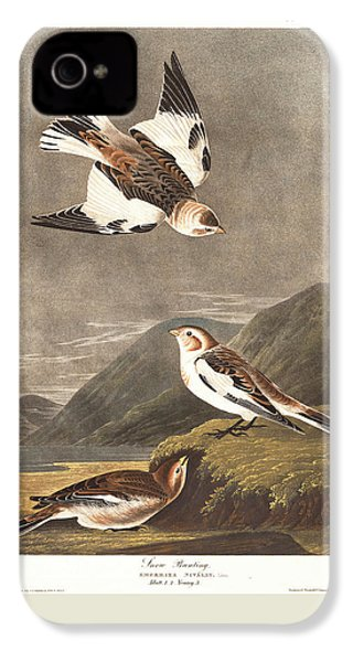 Snow Bunting IPhone 4 / 4s Case by Anton Oreshkin