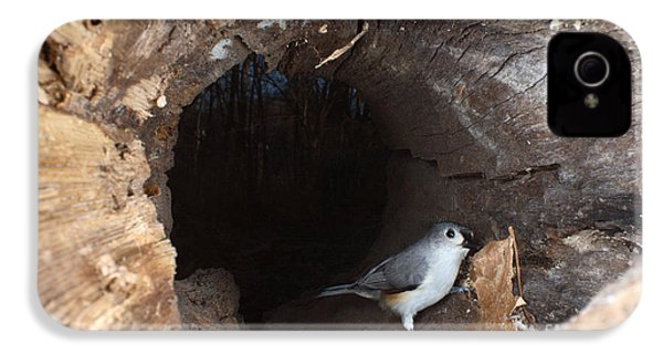 Tufted Titmouse In A Log IPhone 4 Case by Ted Kinsman