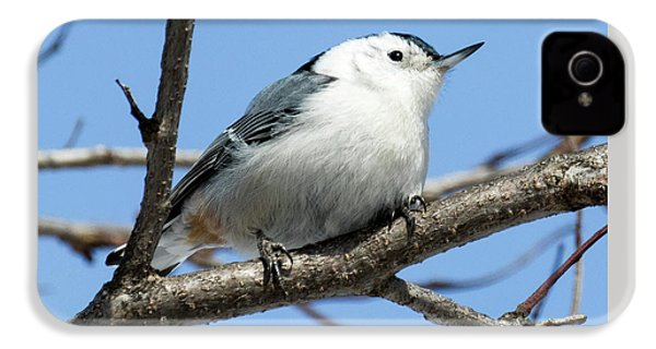 White-breasted Nuthatch IPhone 4 Case by Ricky L Jones