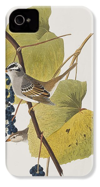White-crowned Sparrow IPhone 4 Case by John James Audubon