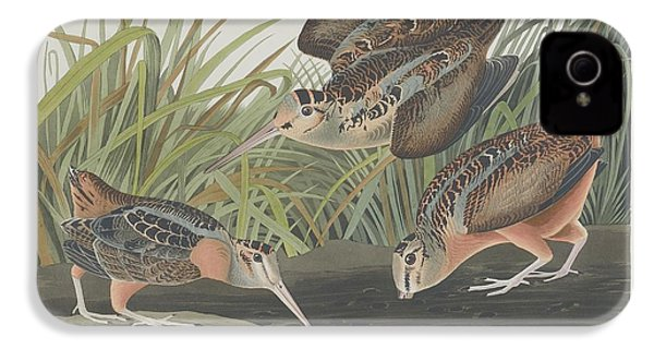 American Woodcock IPhone 4 Case by Dreyer Wildlife Print Collections