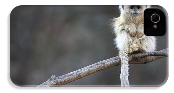 Golden Snub-nosed Monkey Rhinopithecus IPhone 4 / 4s Case by Cyril Ruoso