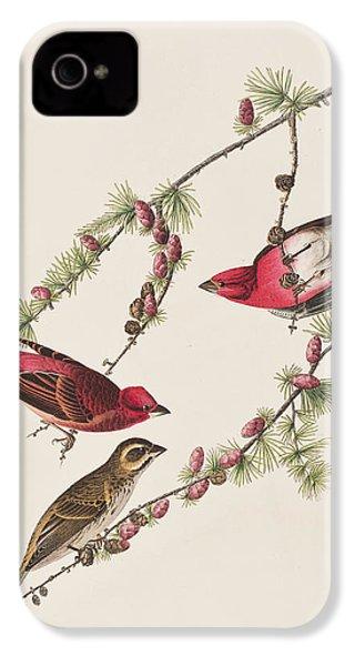 Purple Finch IPhone 4 Case by John James Audubon