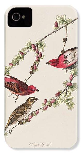 Purple Finch IPhone 4 / 4s Case by John James Audubon