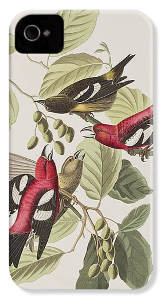 White-winged Crossbill IPhone 4 Case