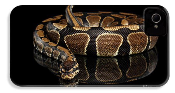 Ball Or Royal Python Snake On Isolated Black Background IPhone 4 Case by Sergey Taran