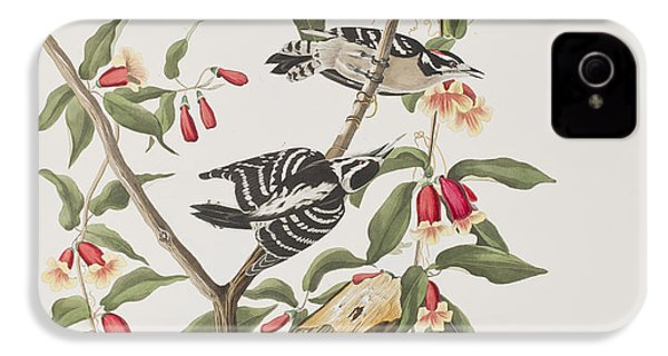 Downy Woodpecker IPhone 4 Case by John James Audubon
