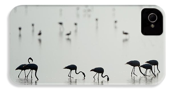 Greater Flamingos Phoenicopterus Roseus IPhone 4 Case by Panoramic Images
