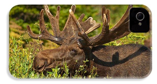 Moose IPhone 4 Case