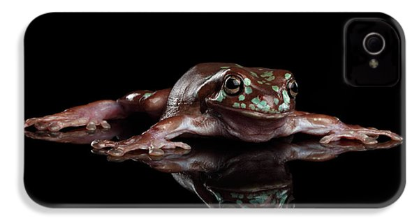 Australian Green Tree Frog, Or Litoria Caerulea Isolated Black Background IPhone 4 Case by Sergey Taran