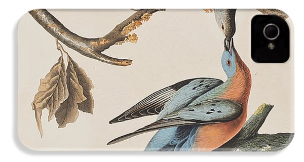 Passenger Pigeon IPhone 4 / 4s Case by John James Audubon