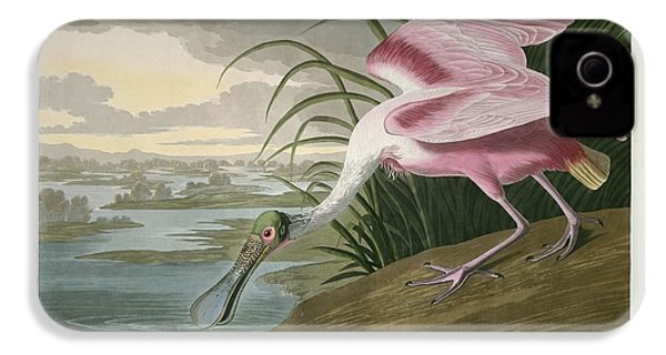 Roseate Spoonbill IPhone 4 Case by Rob Dreyer