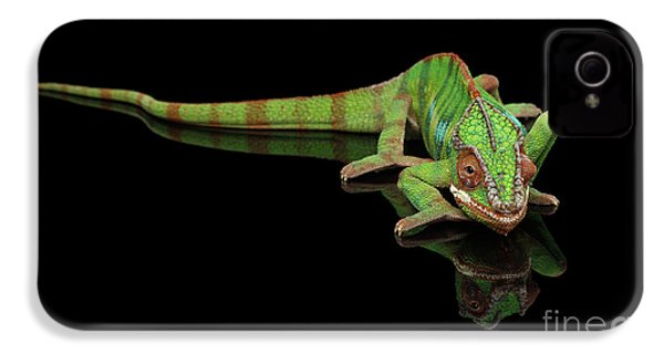Sneaking Panther Chameleon, Reptile With Colorful Body On Black Mirror, Isolated Background IPhone 4 Case by Sergey Taran