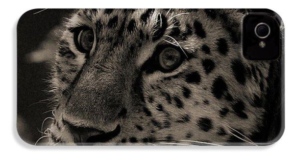 Amur Leopard IPhone 4 Case by Martin Newman