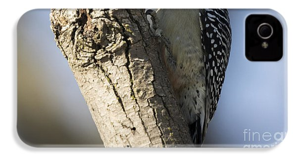 Red-bellied Woodpecker IPhone 4 Case