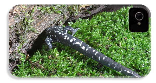 Slimy Salamander IPhone 4 / 4s Case by Ted Kinsman