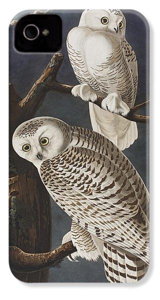 Snowy Owl IPhone 4 / 4s Case by John James Audubon