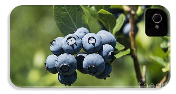 Blueberry Bush IPhone 4 / 4s Case by John Greim