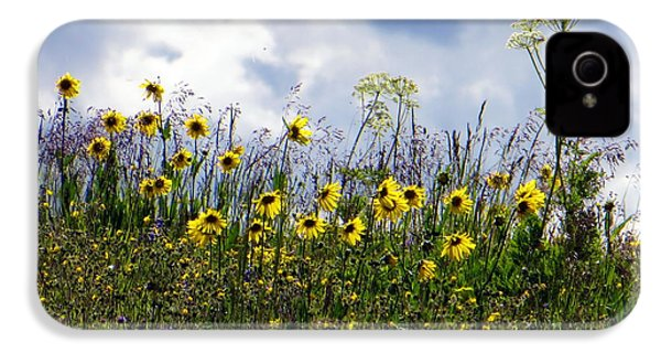 A Daisy Day IPhone 4 Case by Karen Shackles