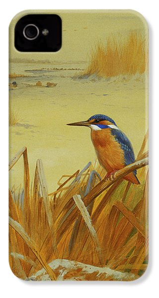 A Kingfisher Amongst Reeds In Winter IPhone 4 Case