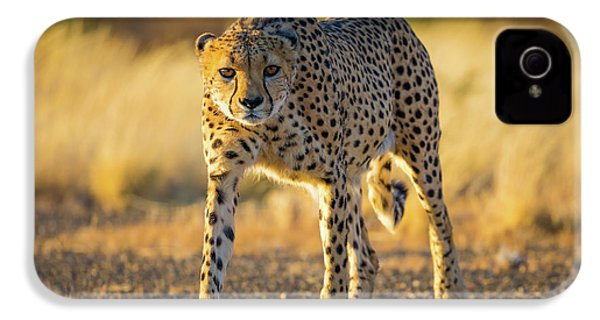 African Cheetah IPhone 4 / 4s Case by Inge Johnsson
